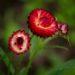 Цветочный гороскоп по дате рождения для родившихся с 21 и по 31 января