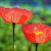 Цветочный гороскоп по дате рождения для родившихся с 1 по 10 марта