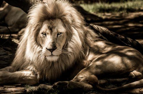 Характеристика мужчины Льва!