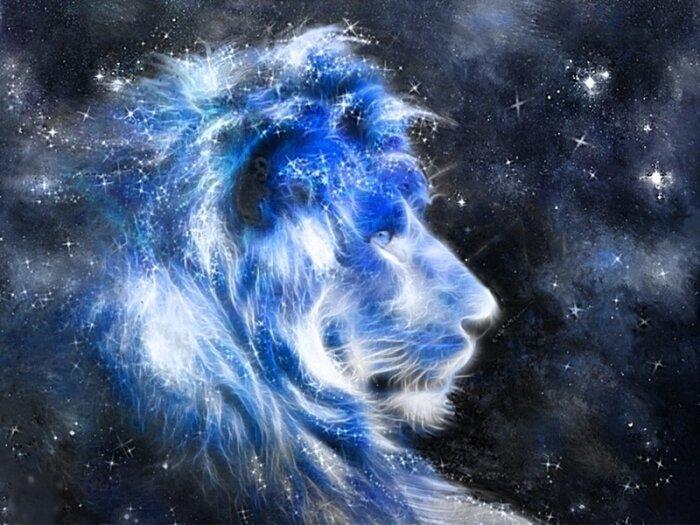 10 фактов о Львах!