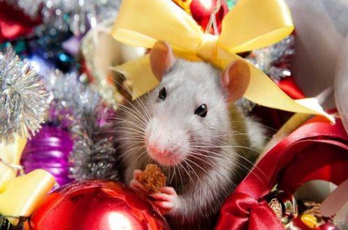Год крысы для знаков зодиака!