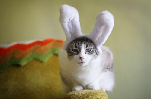 Кролик (кот), восточный гороскоп, пушистик или хитрец?